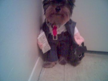 businessdog