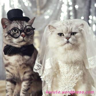 catwedding