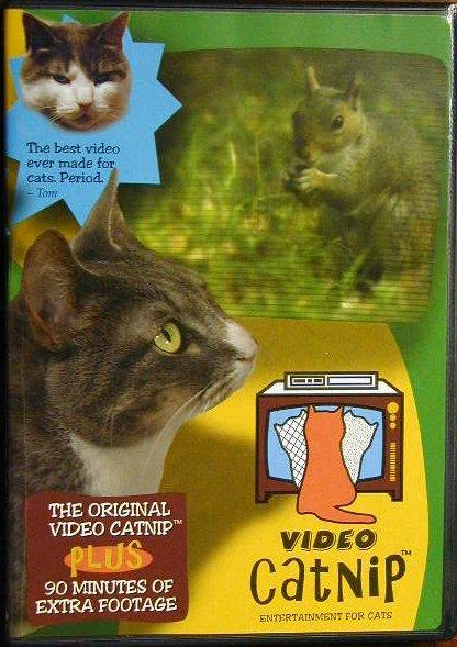 video_catnip