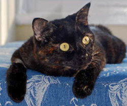 besscat
