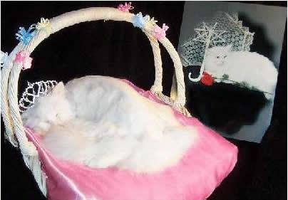 my_little_kitty_cat_family_044