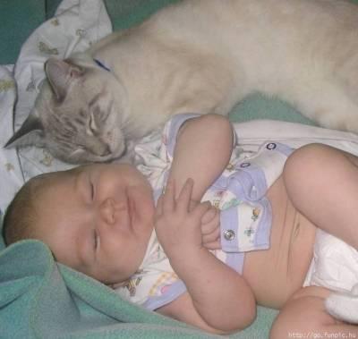 catbaby