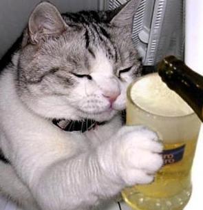 cat-beer2