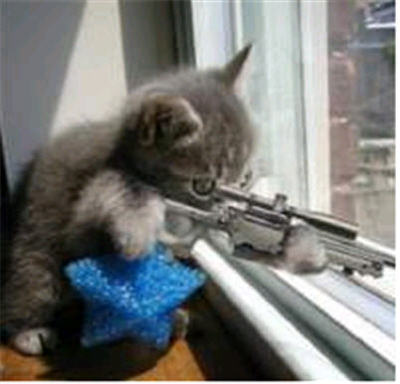 crazy-kitten-with-gun