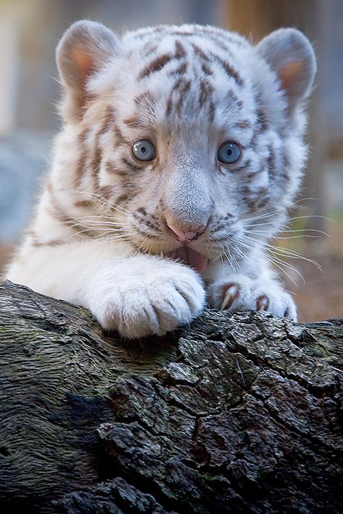 babycat3