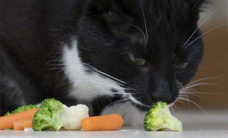 cat-only-eats-veg-masons-32736834