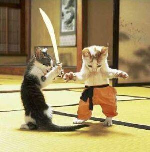 catfight-5