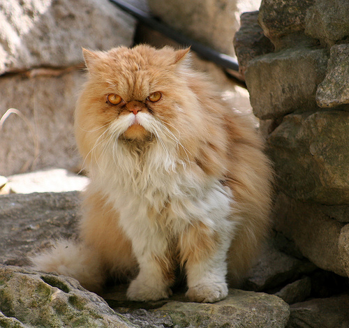 The cat with facial hair