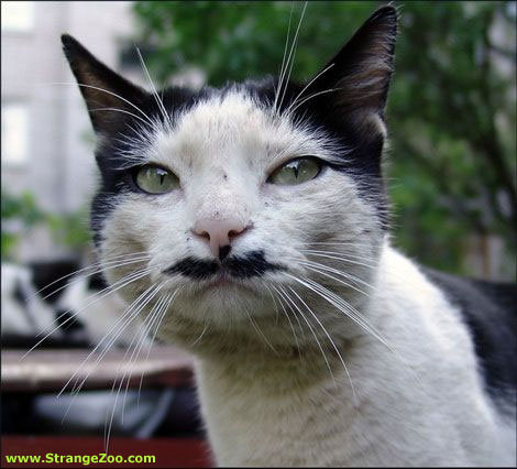 catmoustache21