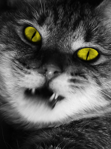 vampirecat2marvinsiefke