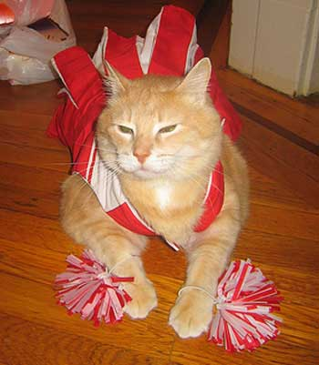 cheerleadercat