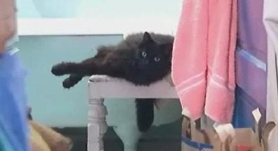 hoppycat