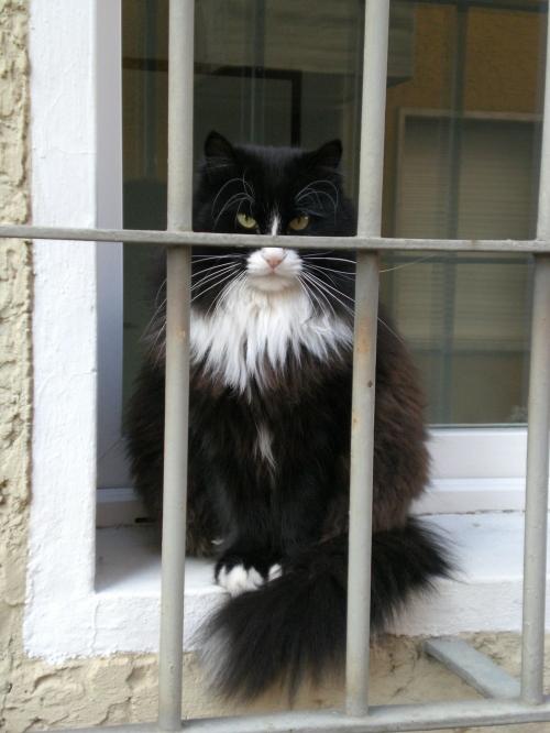 jailcat