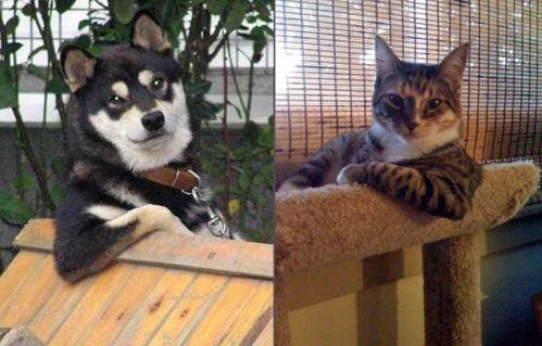 cool-cat-cool-dog