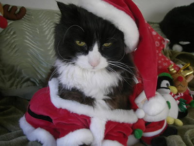 santa cat world wide whiskers