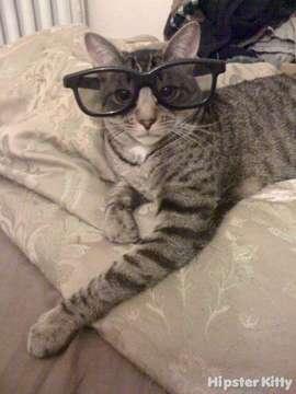 http://worldwidewhiskers.files.wordpress.com/2010/02/pork_chop_is_the_ultimate_hipster_kitty-euz1exgurbc4044oog8o40gow-bwck9qajjmogsc88kosokc8co-th-jpeg.jpg
